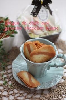 Langue_de_chatchocolat_blanc_PT.jpg